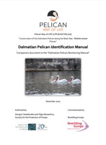 Dalmatian Pelican Identification Manual